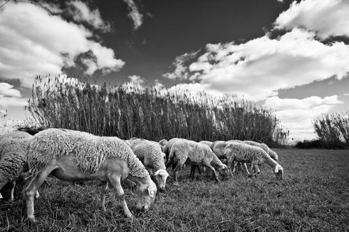 "La imagen de la semana: ""La pastura"" de Oscar Castelao"