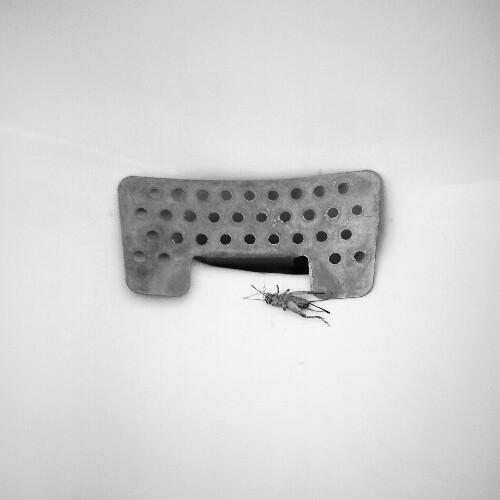 """La imagen de la semana: """"Jiminy Cricket"""" de Ramiro Gómez"""