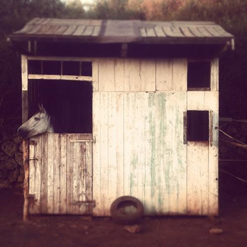 """La imagen de la semana: """"Horse's house"""" de Bitocels"""