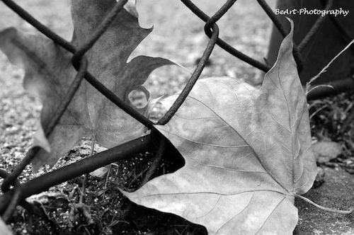"La imagen de la semana: ""Slave To Love"" de BeArt-Photography"
