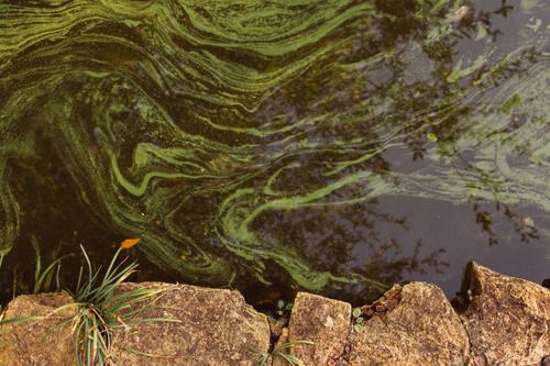 "La imagen de la semana: ""Pond"" de Isma Monfort Vialcanet"