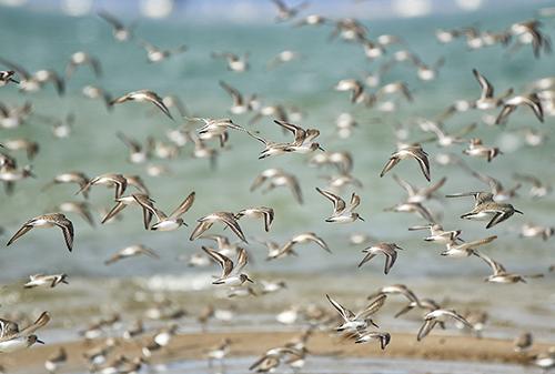 """La imagen de la semana: """"Ocells del Delta"""" de Araceli Merino"""